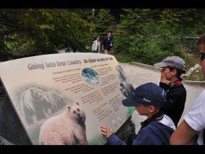 Mais pas encore de grizzli à l'horizon!