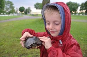 une tortue pour Basile