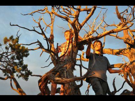 des piafs dans les arbres